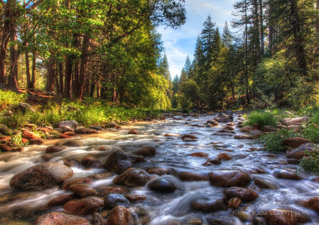 Near Wawona, Yosemite NP