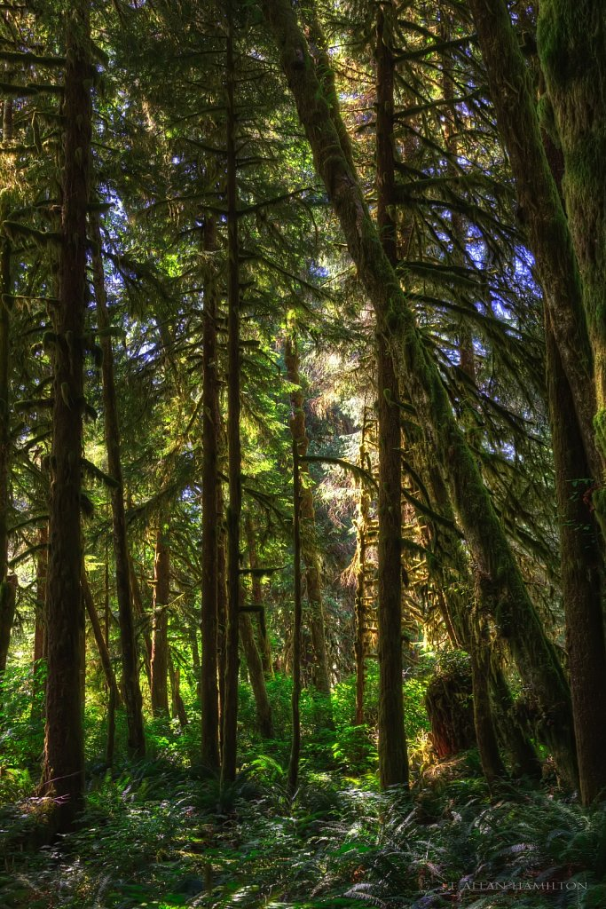 Rain Forest near Port Renfrew, Vancouver Island, BC