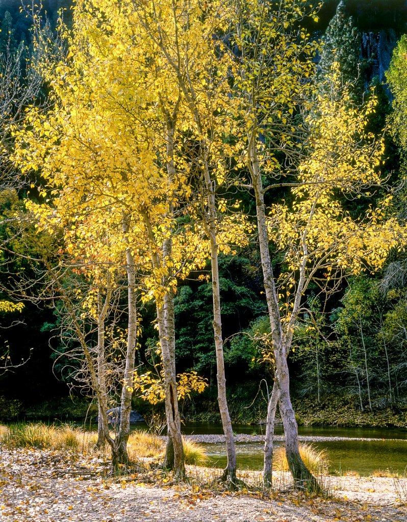 Merced River near Lower Cascades