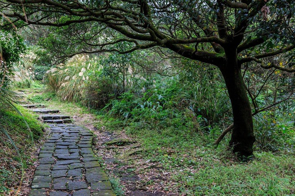 Yangmingshan Trail near Taipei, Taiwan